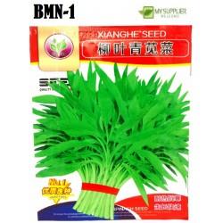 spinach (bayam) seeds