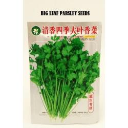 big leaf parsley seeds